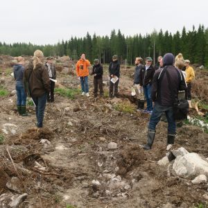 Luontoihmiset ja metsäväki avohakkuulla