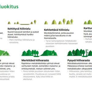 metsien hiilinielut