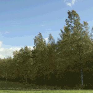 GIF heiluvista puista.