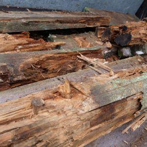 Lahoavaa puuta.