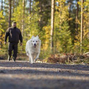 Mies ja koira kulkevat syksyisellä metsätiellä