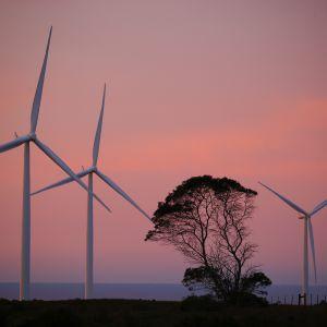 Tuulivoimaloita Etelä-Afrikassa
