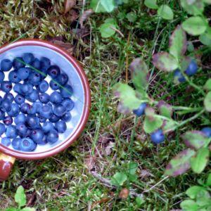 Mustikat ovat suomalaista lähi- ja superruokaa.