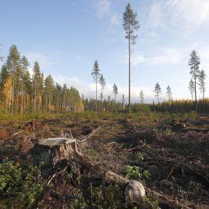 Metsä