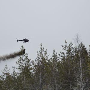 Metsiä lannoitetaan helikopterista tuhkalla.