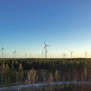 Tuulivoimaloita Kalajoen Miilukankaalla.