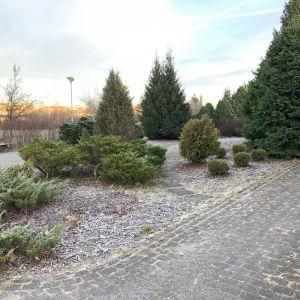 Launeen arboretum
