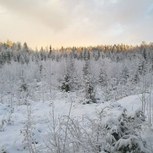 Luminen maisema Vetelissä 26.11. 2018.