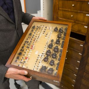 Luonnontieteellisen keskusmuseon johtaja Leif Schulman esittelee Marsalkka Mannerheimin isoisän kovakuoriaiskokoelmaa.
