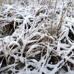 Marraskuun lopussa lunta oli vain muutamia senttejä.