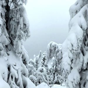 Lumisia puita.