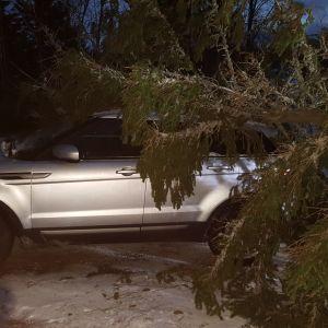 Auton päälle kaatunut puu Pohjanmaalla.
