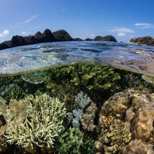 Koralliriutta ja veden pinta