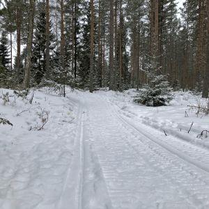 Kokkolan ensimmäinen talvireitti kävelijöille ja pyöräilijöille kulkee osin Wanhan Kallen kinttupolkua.