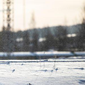 Lumisade talvi pakkanen lumi