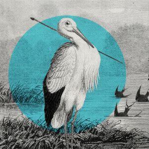 Nuoli kaulassaan Afrikasta Saksaan lentänyt kattohaikara muutti käsityksiä lintujen talvimuutosta. Pääskyjen uskottiin vaipuvan talveksi horrostamaan järven tai meren pohjaliejuun.