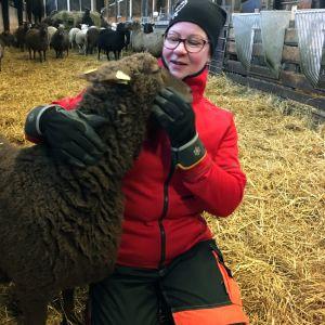 Pohjanmaan lammasosuuskunnan puheenjohtaja Hannele Ulvo silittää lammasta