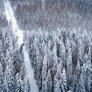 Sähkölinja ja lumisia puita. Yksi puista kaatumaisillaan linjan päälle.