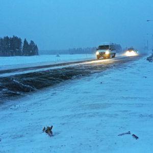 Autoja valtatiellä hämäränä talviaamuna.