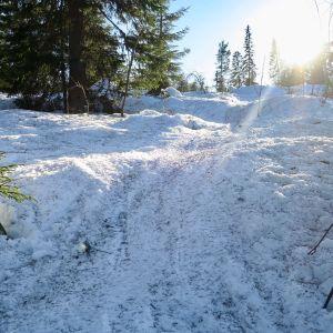 luminen metsärinne