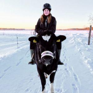 Senja Meriläinen lehmän selässä.