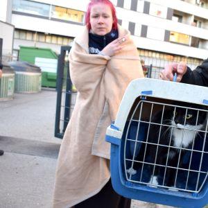 Amanda Saarinen sai molemmat kissansa takaisin elosssa Keskuskartanon tulipalossa 15.5.2019. Kuvassa Sira-kissa.