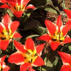 Kevätkukkia Washingtonin osavaltiossa vuonna 2004.