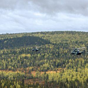 Kolme helikopteria metsän yllä.