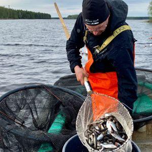 Kalastajalla on haavissa kaloja.