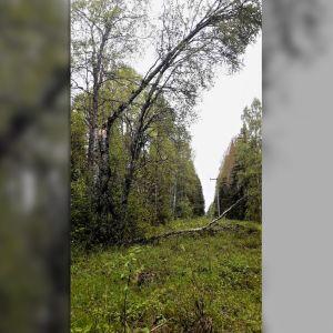 Puuskittainen tuuli on kaatanut puita sähkölinjoille.