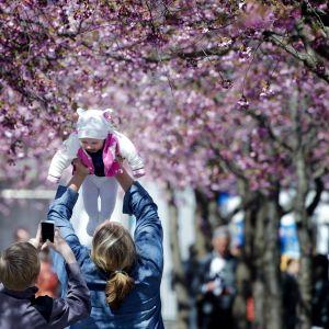 Nainen nostaa vauvaa ilmaan. Taustalla kukkivia kirsikkapuita.