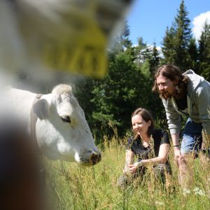 lehmipaimenet tutustuvat lapinlehmiin