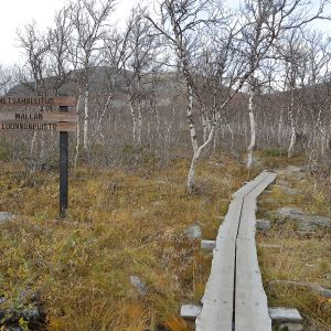 Retkeilijöitä Mallan luonnonpuistossa