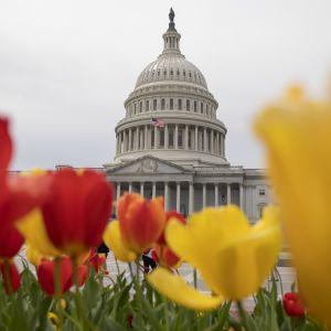 Yhdysvaltain kongressin rakennus Washingtonissa.