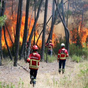 Palomiehet sammuttavat metsäpaloa.