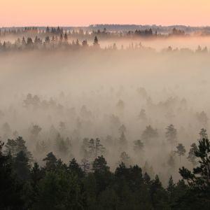 Sumuinen ja hämyisä metsämaisema