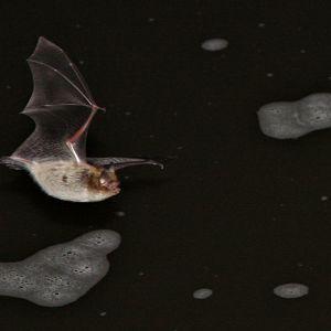 Vesisiippa saalistamassa yön pimeydessä.