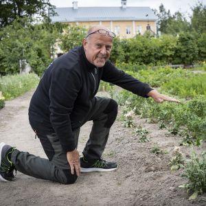 Ari Vainionpää näyttää kädellään kuinka korkea tarhaleukoija normaalisti tähän aikaan olisi.