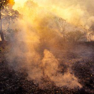 Sademetsää poltetaan karjatalouden tieltä Parán osavaltiossa Brasiliassa.