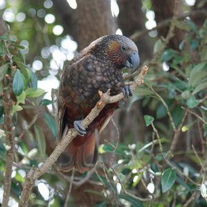 Papukaija puussa