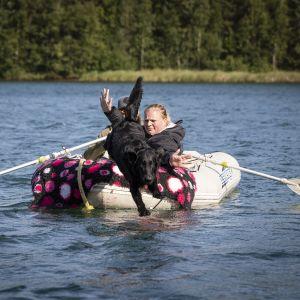 Koira hyppää veneestä.