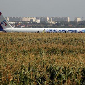 Ural Airlinesin A321-matkustajakone maissipellolla hätälaskeutumisen jälkeen.
