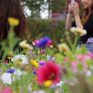 nainen ottaa kuvaa kaveristaan kukkakedolla