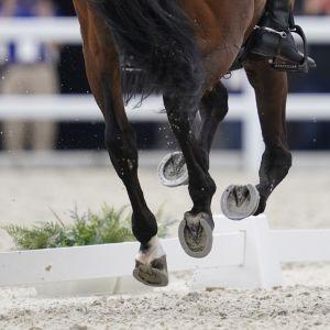 hevonen, kuvituskuva