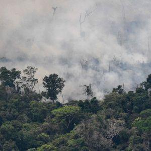 Metsää paloi Porto Velhossa Rondoniassa Brasiliassa 23. elokuuta.