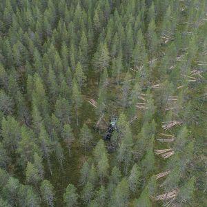 Metsää ja hakkuualuetta kuvattuna ilmasta.