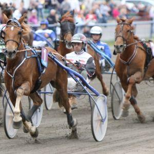 Kavioliiga tuo uusia tuulia kotimaiseen hevosurheiluun
