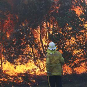 Palomies sammuttamassa pensaspaloa Angouriessa Uuden Etelä-Walesin alueella Australiassa 10. syyskuuta.