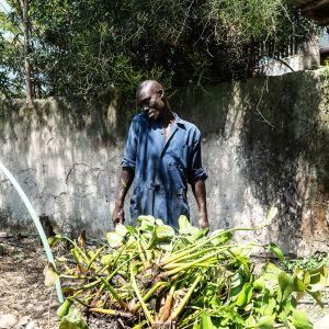 Enock Owuor puhuu kännykkäänsä samalla kuin vie vesihyasintteja biokaasulaitokseen.