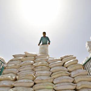 Työntekijä tarkastaa World Food Programmen tarjoamien elintarvikkeiden kuntoa kesäkuun lopulla 2019. Osa elintarvikkeista oli mahdollisesti pilaantuneita.